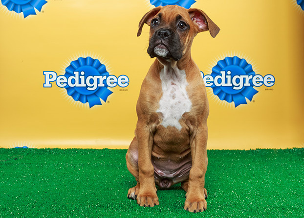 Meet August, one of the stars of this years Puppy Bowl!